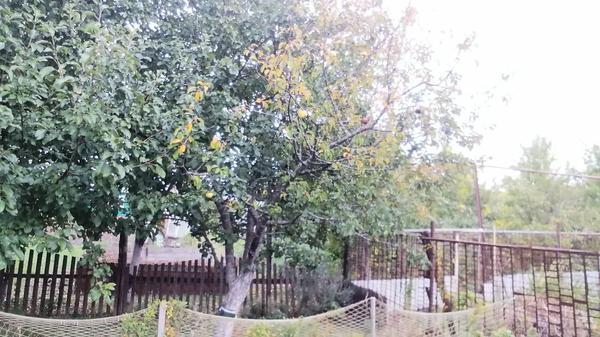 большая ветвь яблони сохнут листья