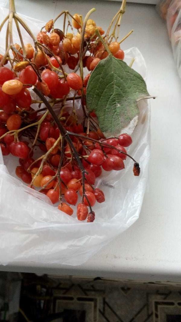 Помогите,пожалуйста, определить ягоды какого растения на фотографии.