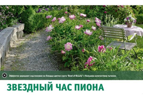Звезный час пиона - статья в планшетной версии журнала Мой Прекрасный Сад