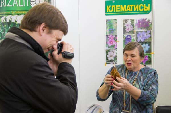 Людмила - королева Клематисов