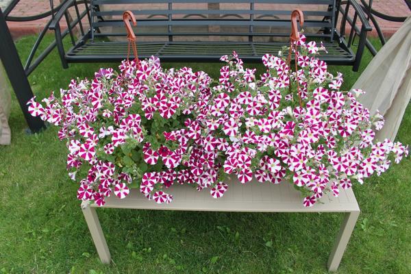 Цветы на скамейке