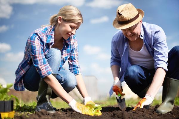 Наиболее распространенные ошибки при посадке растений