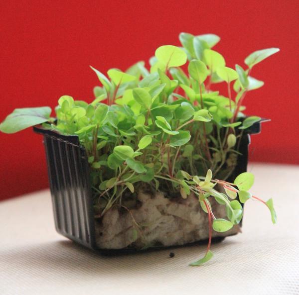 Выращивание кресс-салата - фото в разрезе