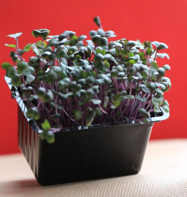 фиолетовый кресс-салат