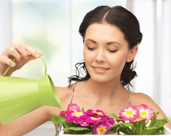Как выйти в финал конкурса домашних цветов
