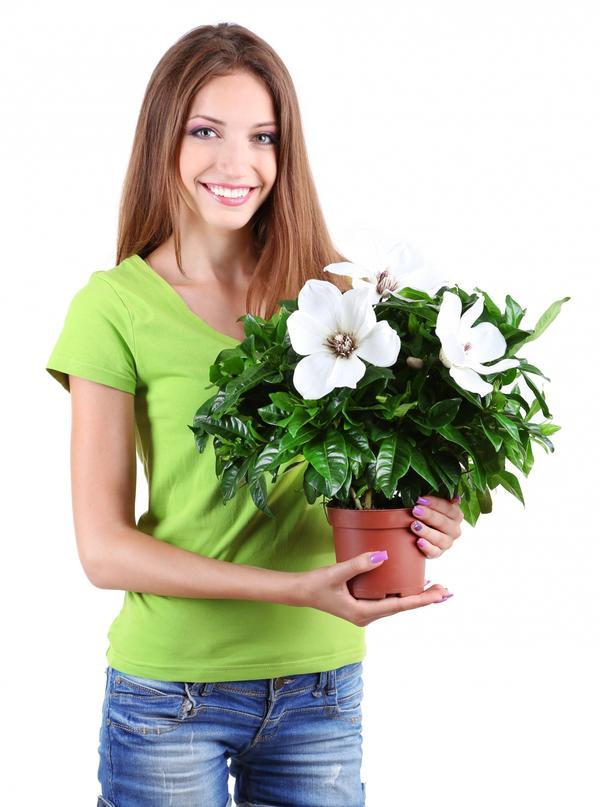 Как победить в конкурсе домашних цветов