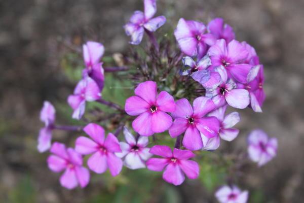 цветы октября