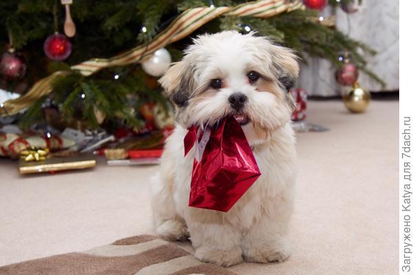 новый год, елка, собака