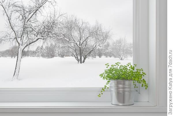 Растения на подоконнике зимой