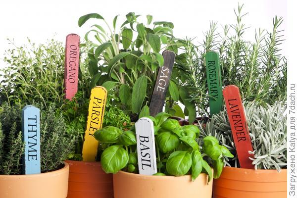 Съедобные растения на кухне