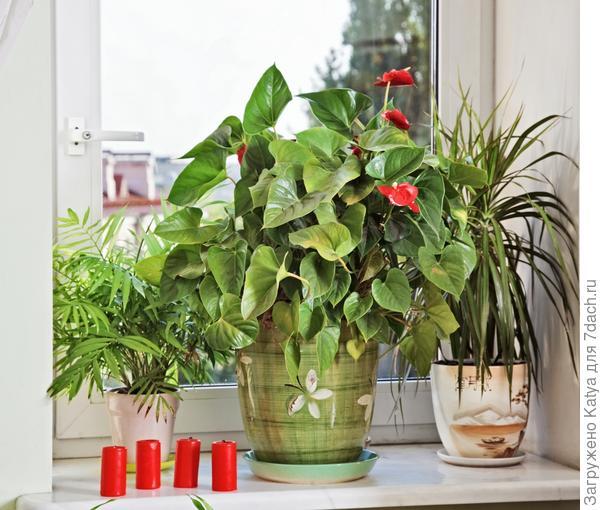 Растения на окне