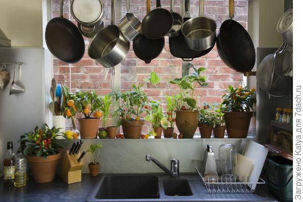12 самых популярных растений для окон кухни