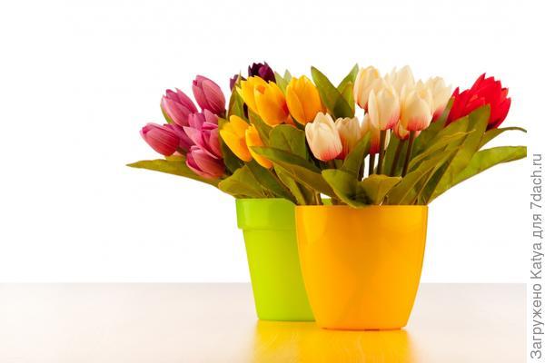 тюльпаны в живописных горшках