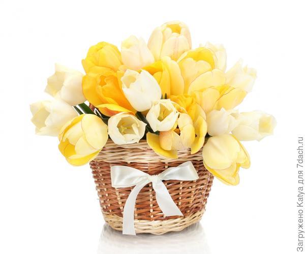 горшечные тюльпаны в подарочной плетенке