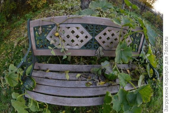 Тыквы на скамейке