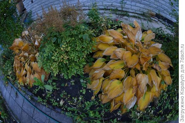 клумба осенью