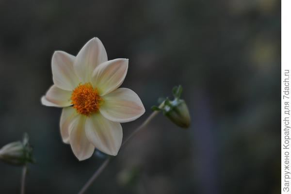 Цветы на даче.