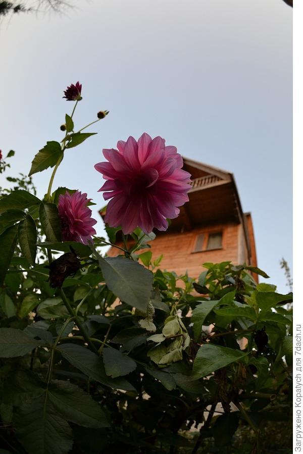 Цветок на фоне дома