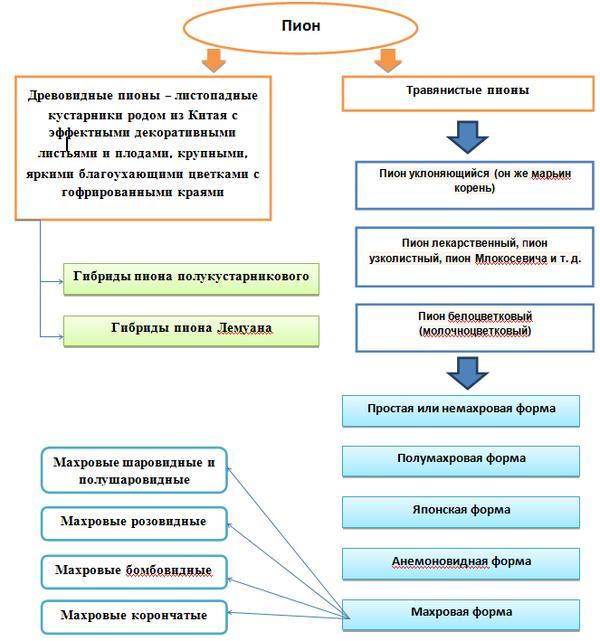 Схема видов пионов