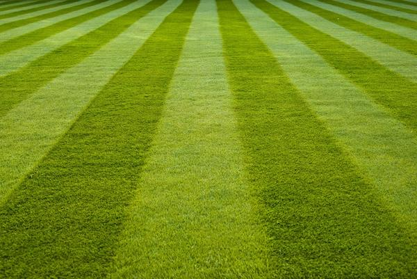 Готовый рулонный газон