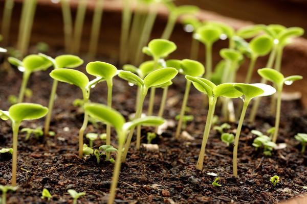 Растения, удобренные фосфором