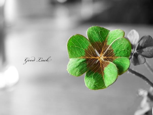Клевер Good Luck