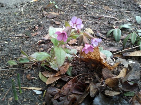Первоцветы 3