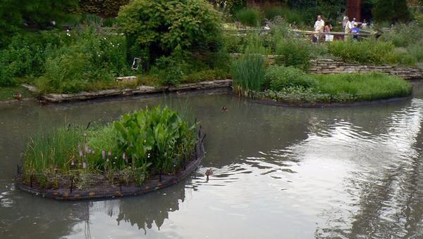 Разные растения на плавучих клумбах