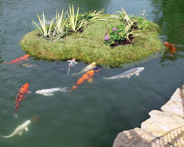 Рыбки у плавающей клумбы