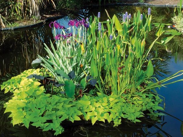 Плавучий островок с зеленью и цветами