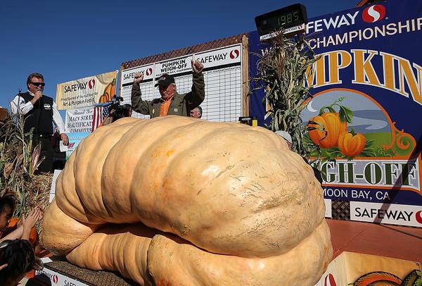 Самая большая тыква 900 кг