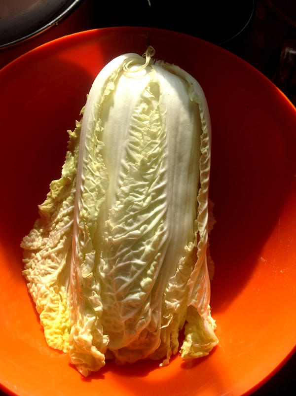 Экспериментальный кочан пекинской капусты