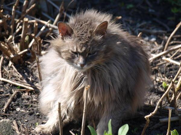 мишка-машка кот