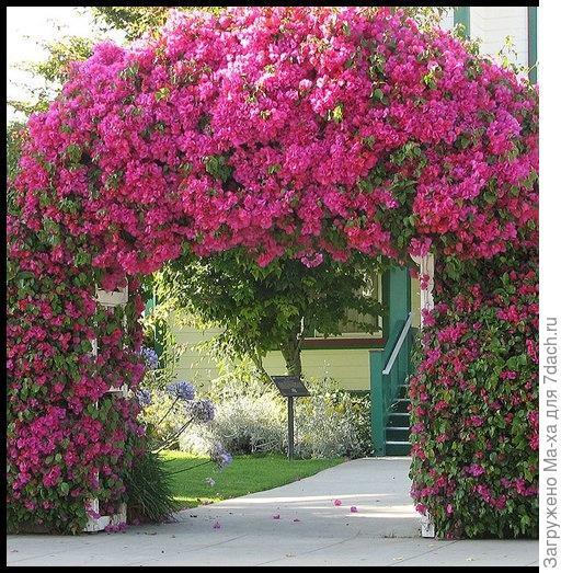 Фото арок в цветах