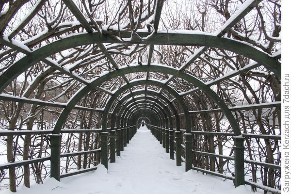 арка с кустами