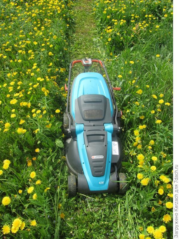 дорожка в поле из одуванчиков