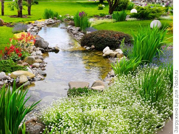 Оформление водоема растениями