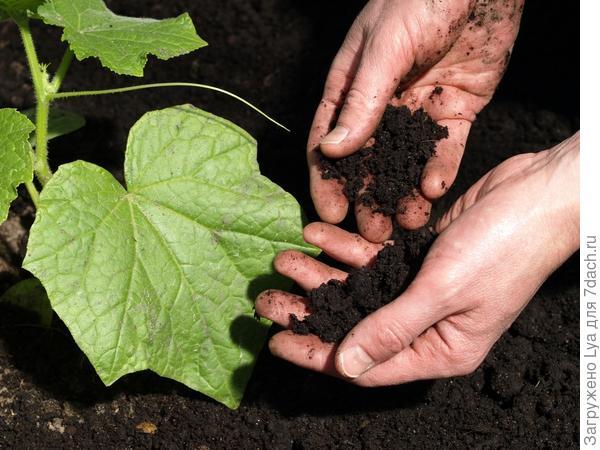 Правильно рыхлим почву