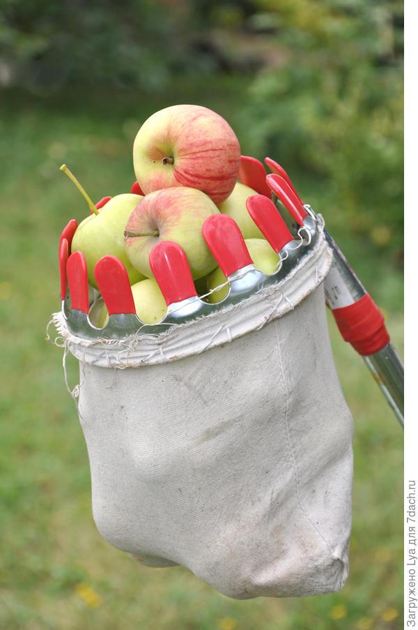 Яблокосниматель