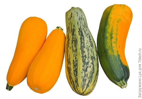 Плоды хранят в открытом виде, в полиэтиленовые пакеты их упаковывать нельзя