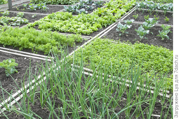 Пряные травы