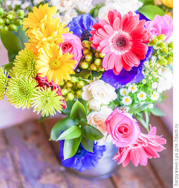 Красивый цветок и его темы