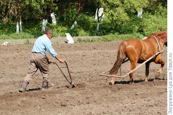Лошадь в упряжке