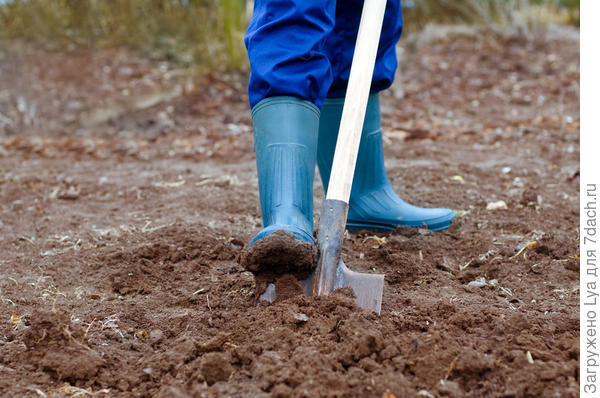 Как принято копать землю под грядки