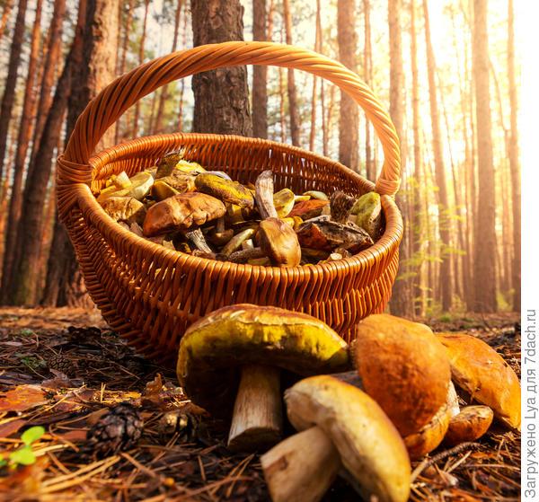 Поделитесь своими рецептами и удачными «грибными» находками