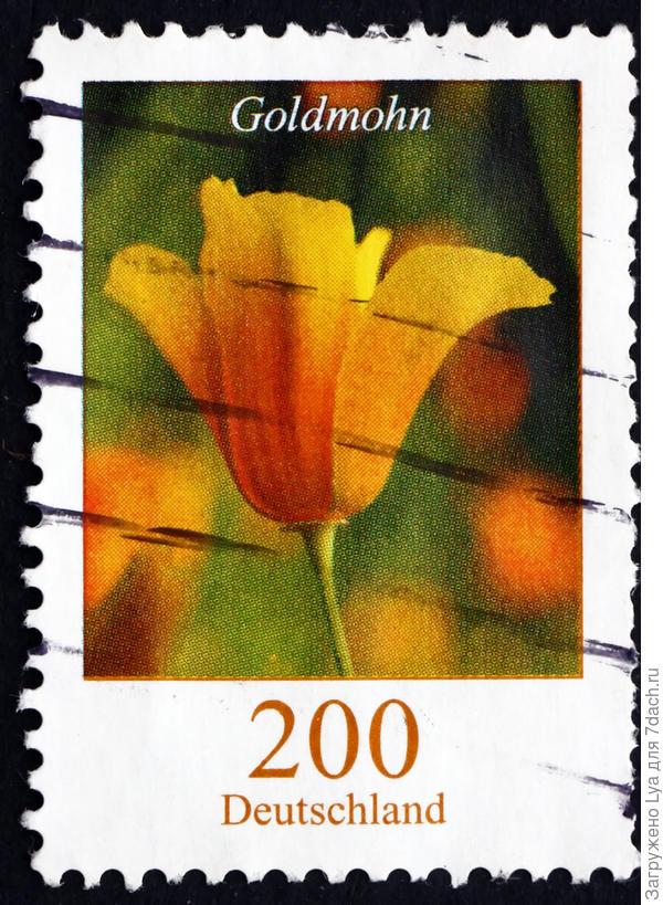 А в 2007 году эшшольция «отметилась» на почтовой марке ФРГ. Boris15 /Shutterstock.com