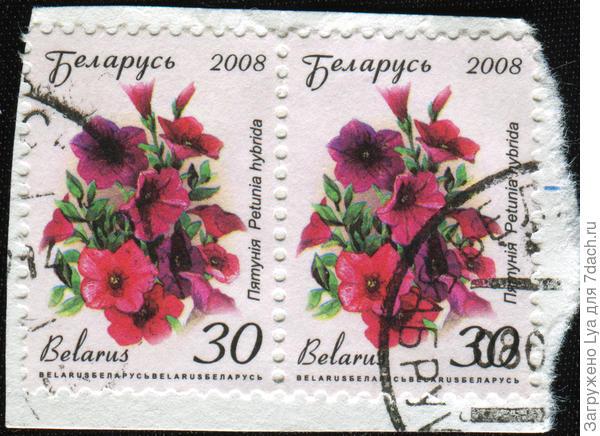 В 2008 году в Белоруссии петуния тоже «отметилась» на почтовых марках. Фото IgorGolovniov/Shutterstock.com