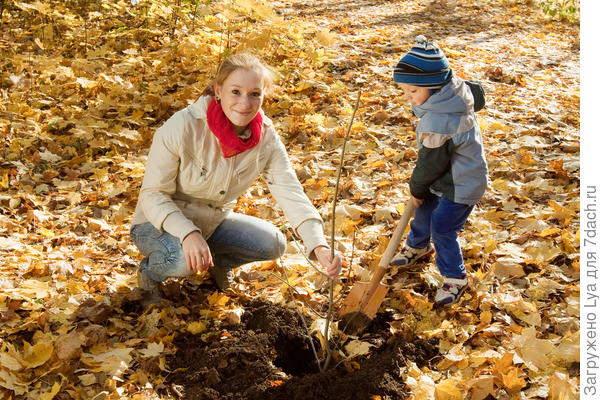 Плюсы и минусы осенней посадки