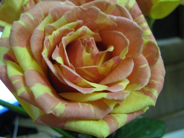 Уважаемые садоводы, нужна ваша помощь!