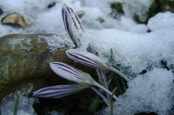 Весна идет! Весне дорогу!!!